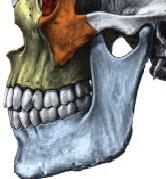 Temporo mandibulaire